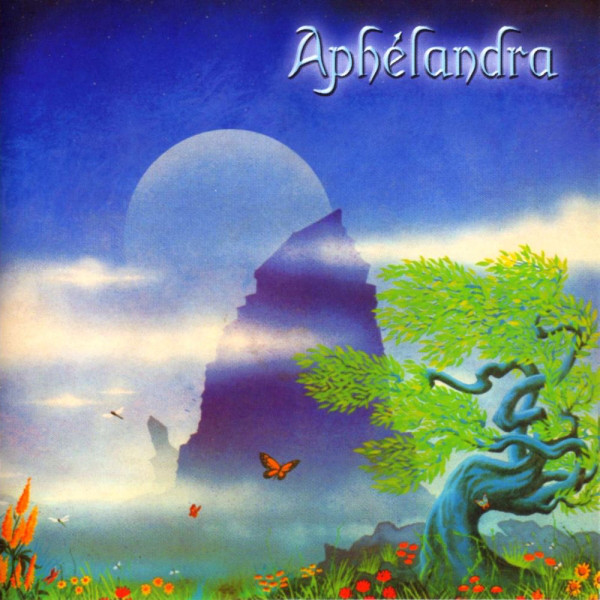 Aphélandra  — Aphélandra