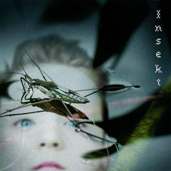 Carptree — Insekt