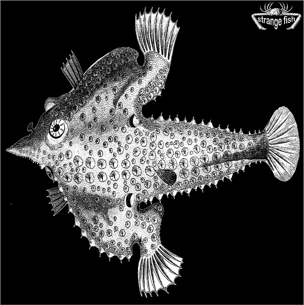 Various Artists — Strange Fish Four